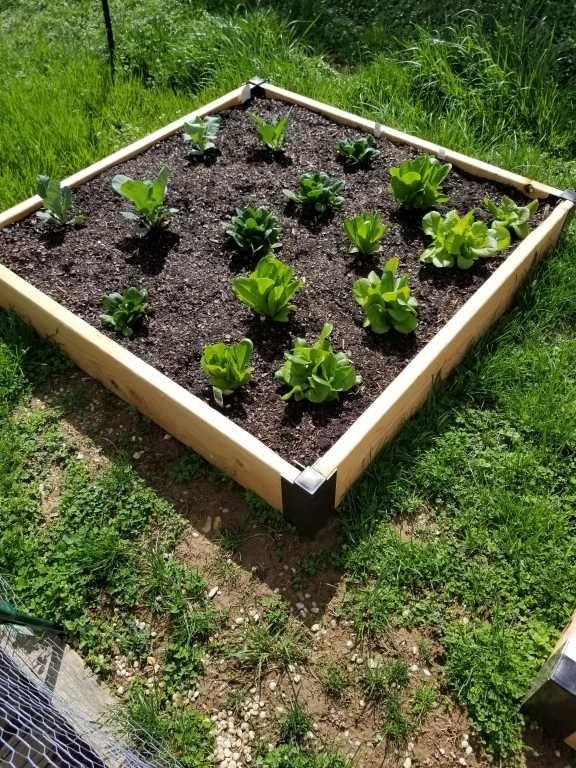 Aluminum Corner Brackets For Diy Raised Garden Beds Gardeners Com In 2020 Diy Raised Garden Raised Garden Garden Care