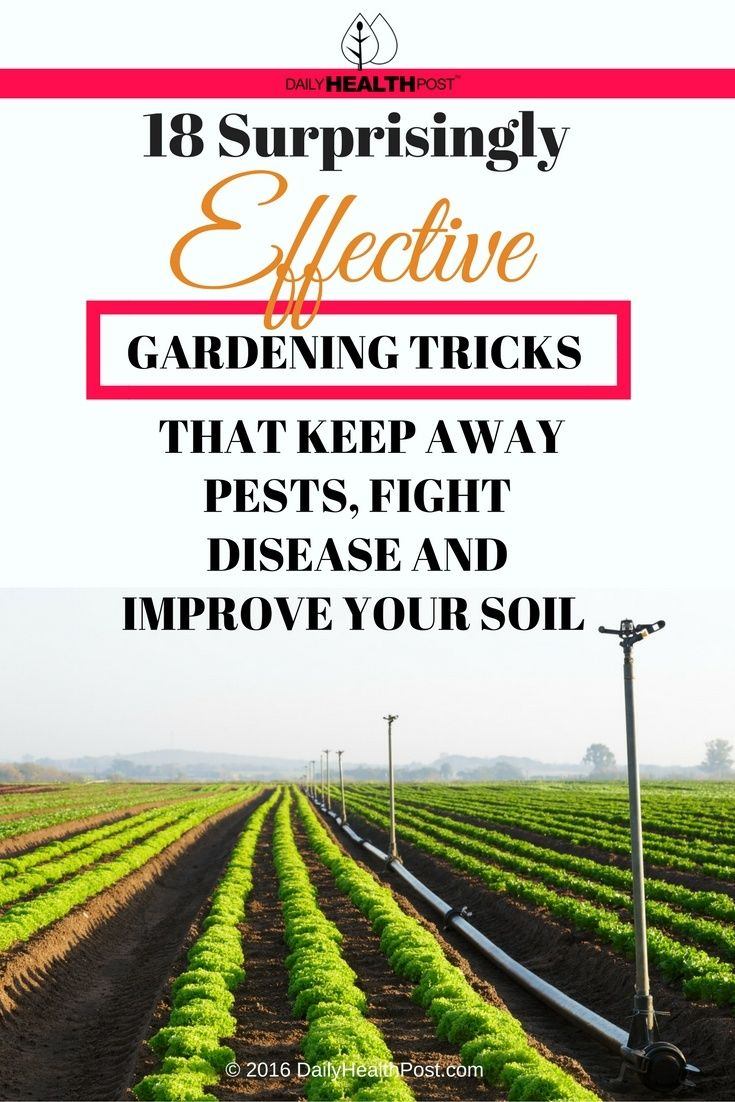 There are many gardening�tricks that can significantly reduce the risk of�vermininfestation or�mold�contamination as well as ensure the best nutrient profile for your crop.