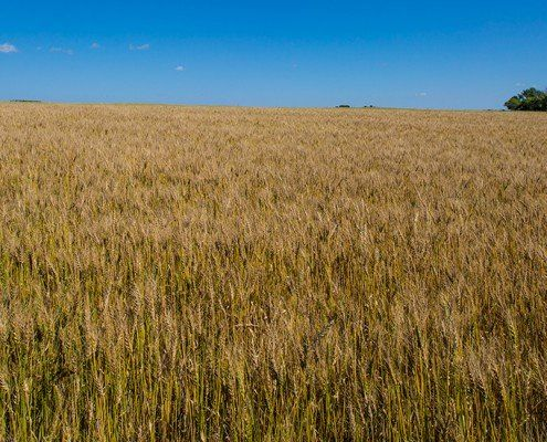 Canadian Farm Land Auction - 2,880 acres in the heartland of Canada -  96 Contacts from 5 Canadian provinces and 9 US states - Sold in two parcels at absolute and reserve auctions - Carlyle, SK, Canada - Luxury Real Estate Auction