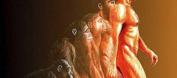 11. Según esta teoría, la evolución se define como un cambio en la frecuencia de los alelos de una población a lo largo de las generaciones. Este cambio puede ser causado por diferentes mecanismos, tales como la selección natural, la deriva genética, la mutación y la migración o flujo genético.