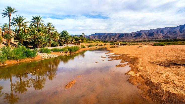 L'oasis de la vallée du Drâa