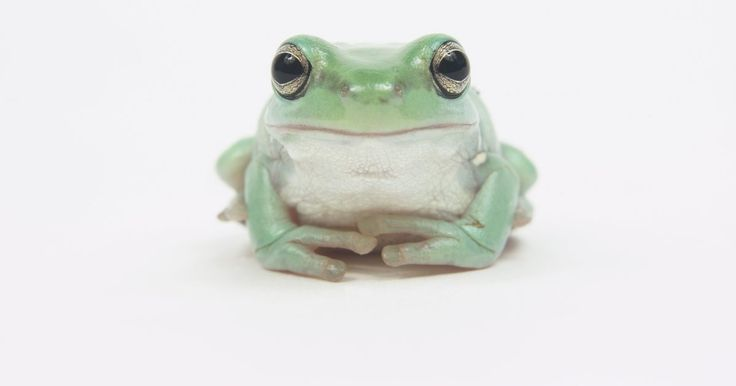 Cómo hacer tu propia máscara de rana. Desde Kermit la rana a la rana príncipe o a la rana de jardín, existen varias opciones de disfraces para aquellos que quieran imitar a este anfibio verde saltando. Junto con un traje verde, el disfraz de rana no estaría completo sin una máscara de rana. Una máscara de rana puede ser modelada usando artículos domésticos y comunes encontrados en ...