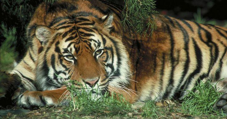 Características del reino animal. Reino animal es el grupo taxonómico que abarca todos los animales vivientes del el planeta tierra. Existen ciertas características de un organismo que lo pueden incluir o excluir en la clasificación.