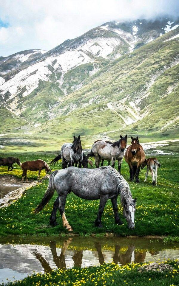 Bucket List:  To see wild horses.