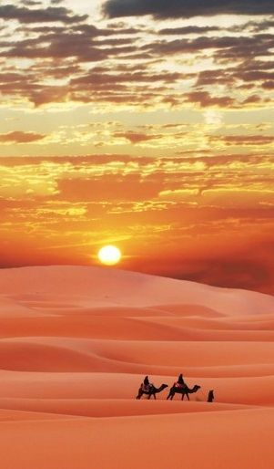Camel trip through the Sahara desert..