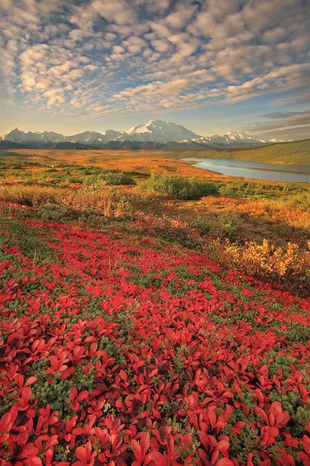 Denali Nation Park, Alaska.: Bucket List, Adventure, Denali National, National Parks Alaska, Travel, Ive Visited, Place