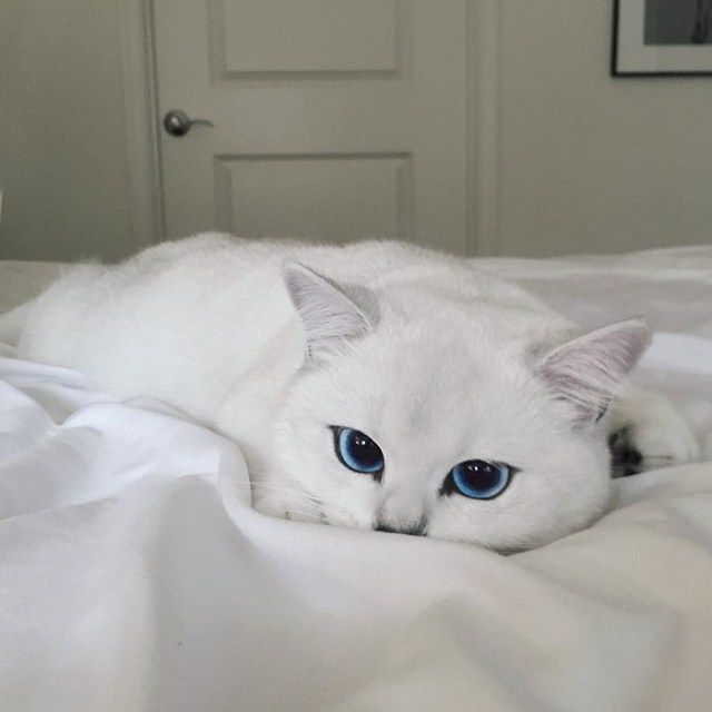 Oh my God this cat's eyes are stunning!