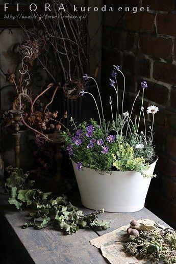 4月の園芸教室。。。寄せ植え見本 |フローラのガーデニング・園芸作業日記