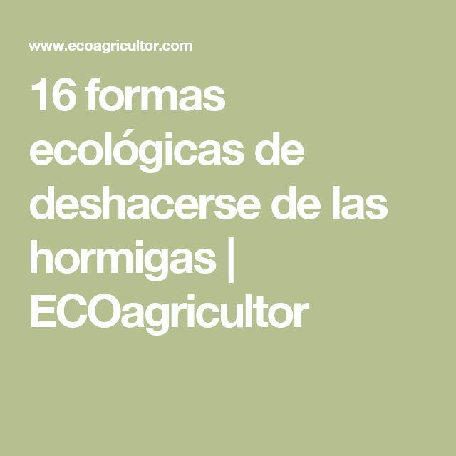 16 formas ecológicas de deshacerse de las hormigas | ECOagricultor