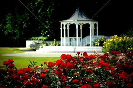 The rose garden,The Esplanade, Palmerston North