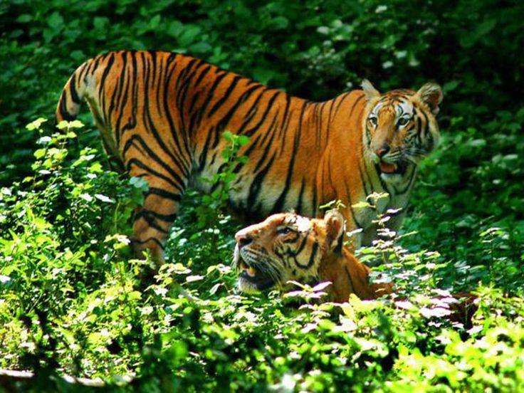 Ranipur Sanctuary - in Uttar Pradesh