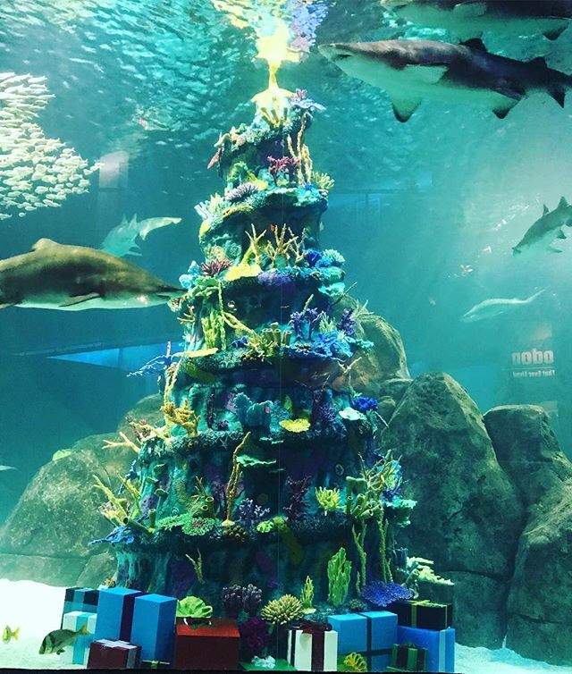 Presenting The World S Tallest Underwater Christmas Tree We Re Going To Officially Light This Baby Tomorrow To Kick Off Chr Bizarre Animals Fun Another World