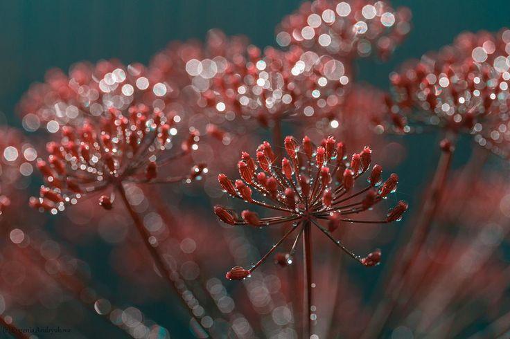 Untitled by Evgenia Andryukova / 500px