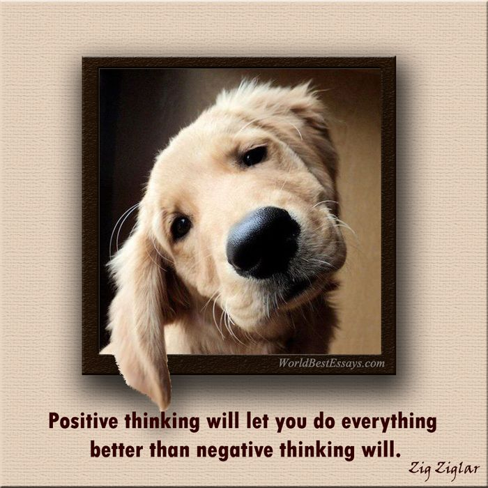 50 Best Pawsitive Quotes Images On Pinterest