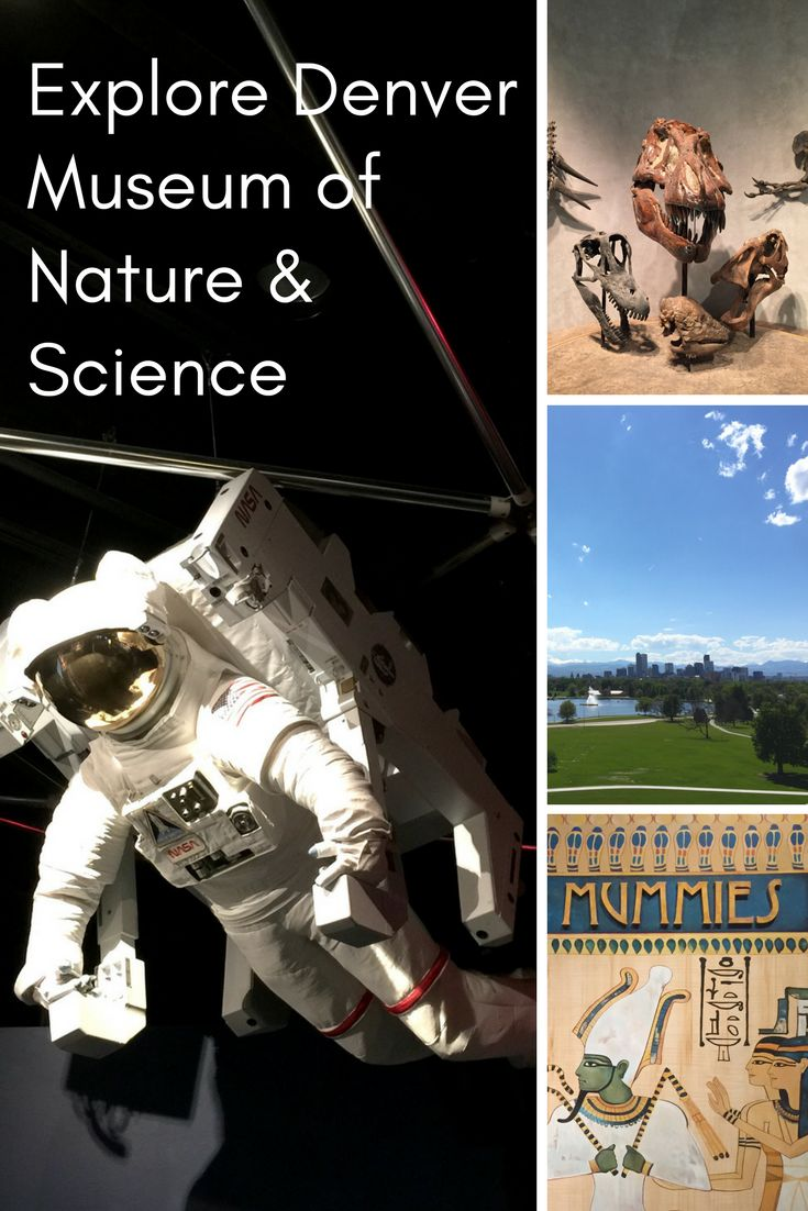 Denver Museum of Nature & Science is a landmark in the city. Situated in City Park with an atrium overlooking the entire park and city skyline, it's a beautiful spot to see Denver. The exhibits are educational and interactive, making this a great place to bring the kids for a day of fun. #DenverExpertAtHyatt #Travel #Denver #Colorado #Museum #Science #FamilyFriendly #Activities #Explore