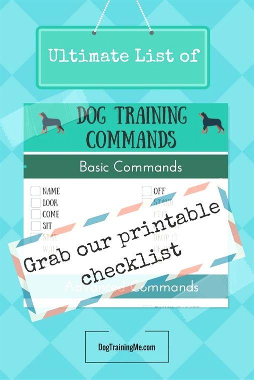service #dog training in my area, #dog training youtube zak, dog
