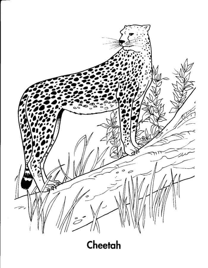 Realistic Cheetah In Motion Coloring Pages Power Rangers Coloring Pages Animal Coloring Pages Zoo Animal Coloring Pages