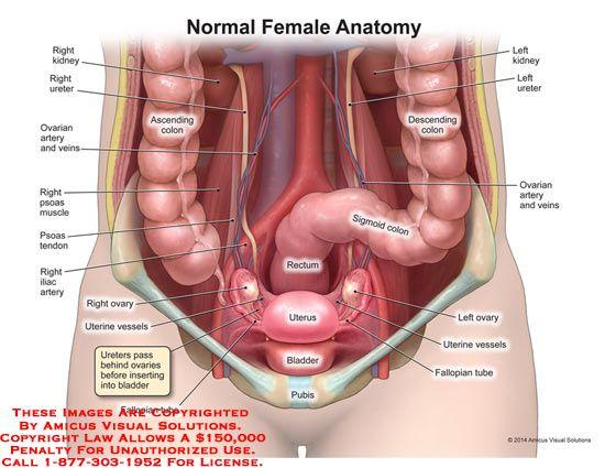 Colon picture anatomy