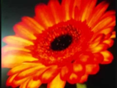 Donna, ovvero il Fiore Arcobaleno.  Poesia tratta da Sillogismi d'amore ...