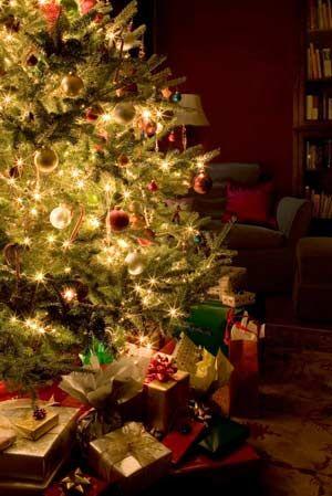 Christmas Tree Fragrance Oil- Capture the magic of Christmas morning all season