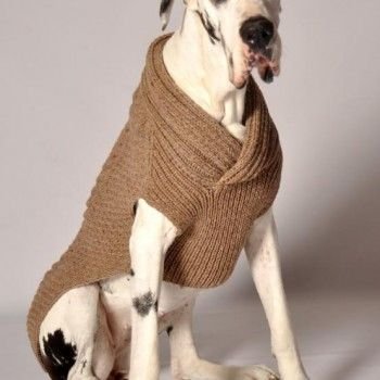 Tattooed Mom | Chilly Dog Sweaters. It's a great dane....in a sweater! need I say more?