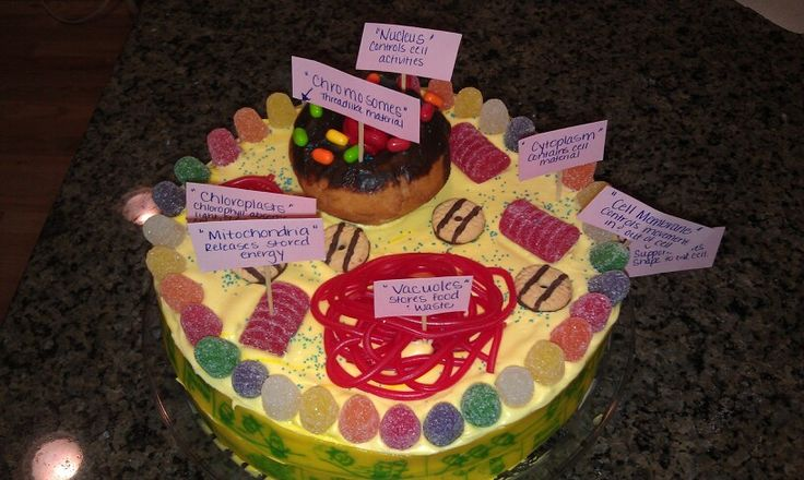 animal cell edible project Edible cell project rules and guidelines for edible cell model: the model and all cell structures must be edible edible animal cell.