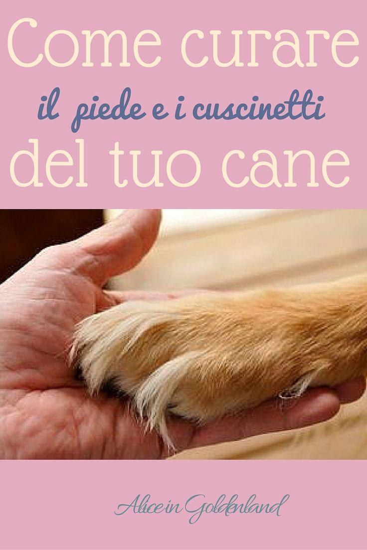 Come curare il piede e i cuscinetti del tuo cane
