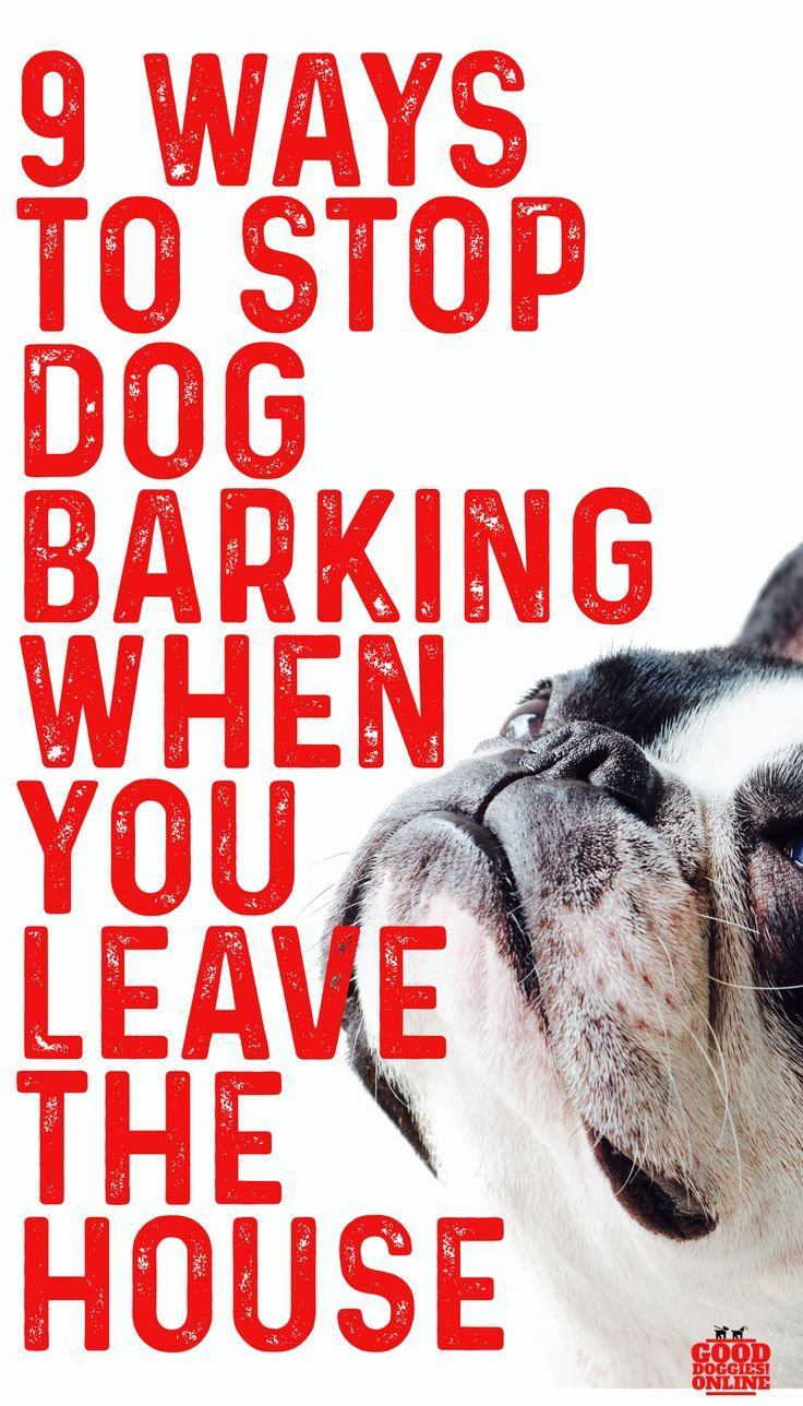 How To Stop A Dog From Barking When You Leave House Stop Dog