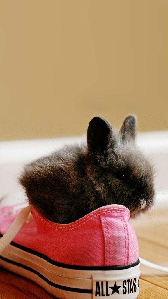 Black baby bunny in a shoe!