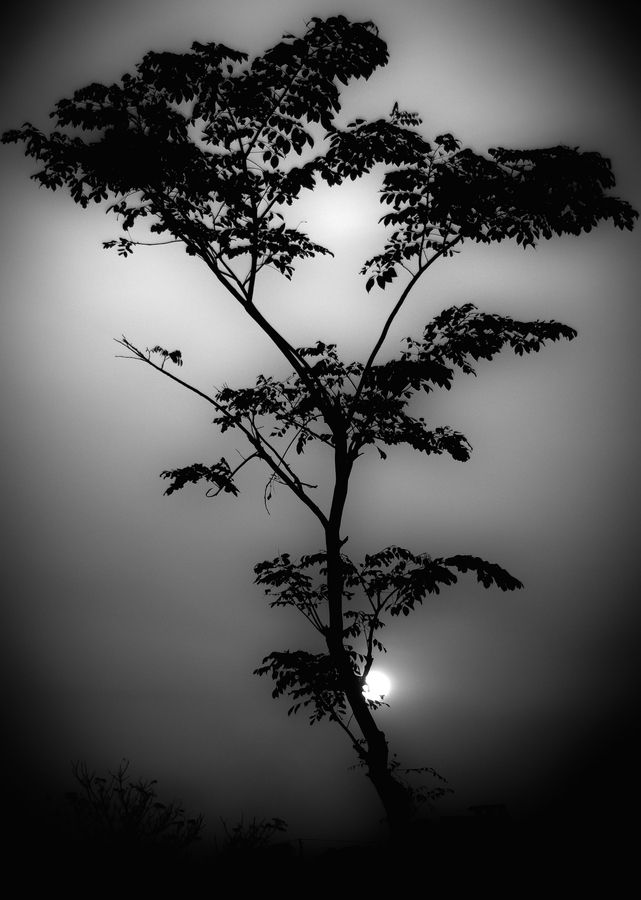 Tree at SunsetPhotos, Black And White, Sunsets, Beautiful, Art, Mothers Nature, Black White, Trees, Nature Photography