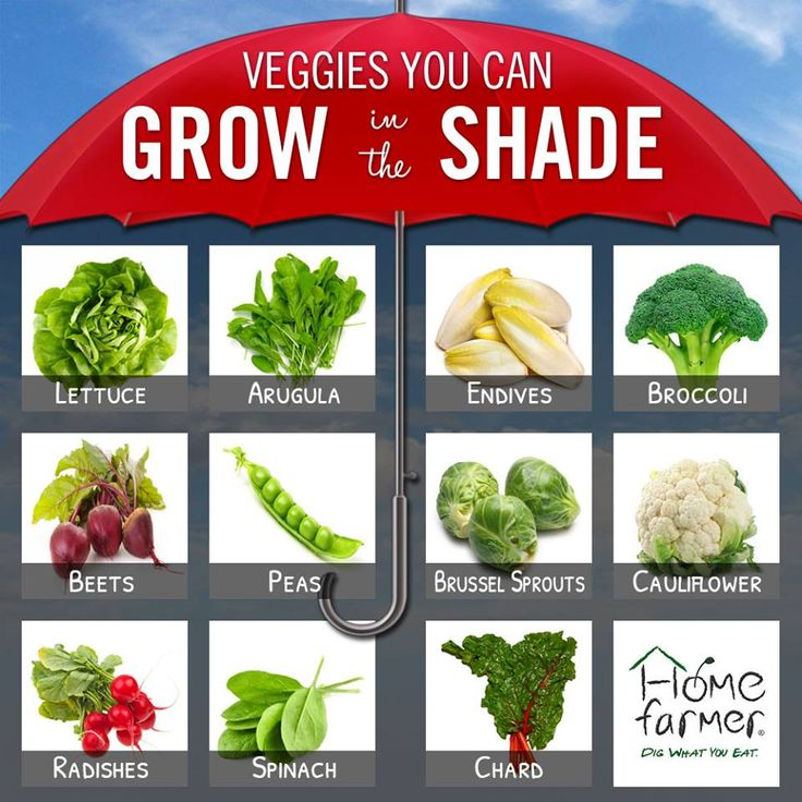 Beds Best Raised Vegetables