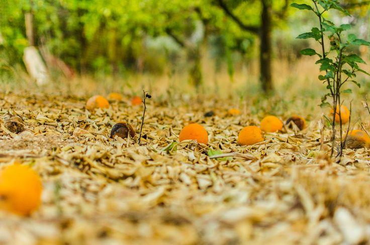fallen fruits by Denys Tsutsayev on 500px