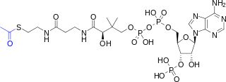 Acetyl-CoA-2D colored.svg
