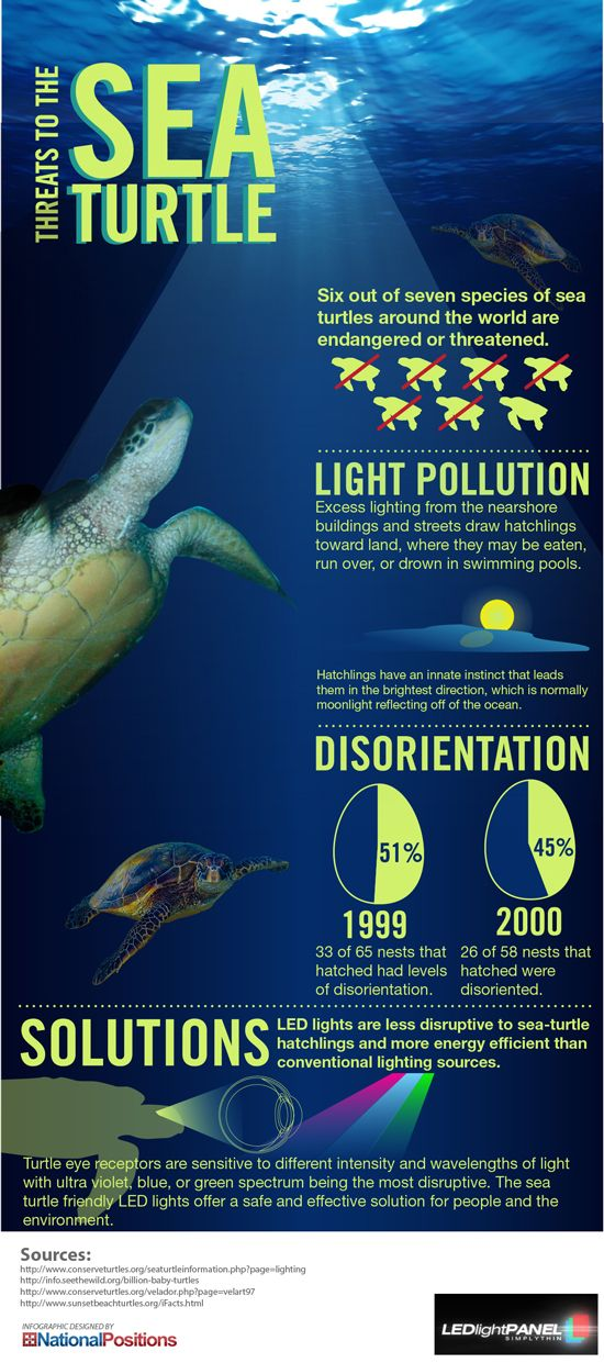 Baby sea turtles in danger - Bright city lights and light pollution have posed a danger to baby sea turtles.  - sponsored