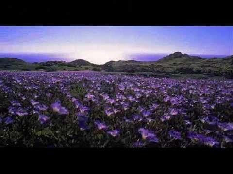 ▶ CHILE DESIERTO FLORIDO.wmv - YouTube