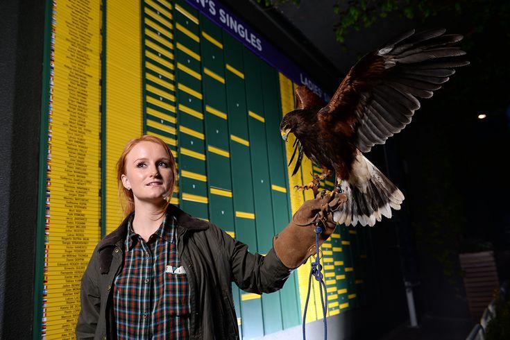 A birds-eye view of The Championships' draw. - Matthias Hangst/AELTC