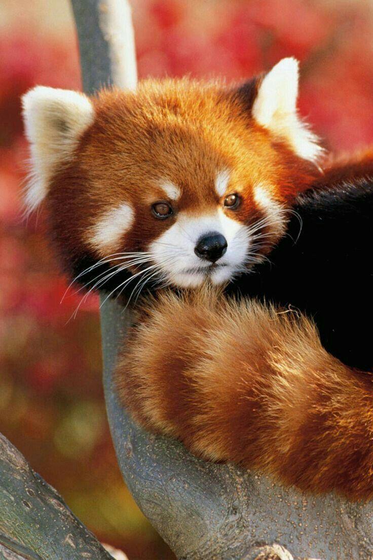 3464 best Animals images on Pinterest | Wild animals, Animal kingdom ...