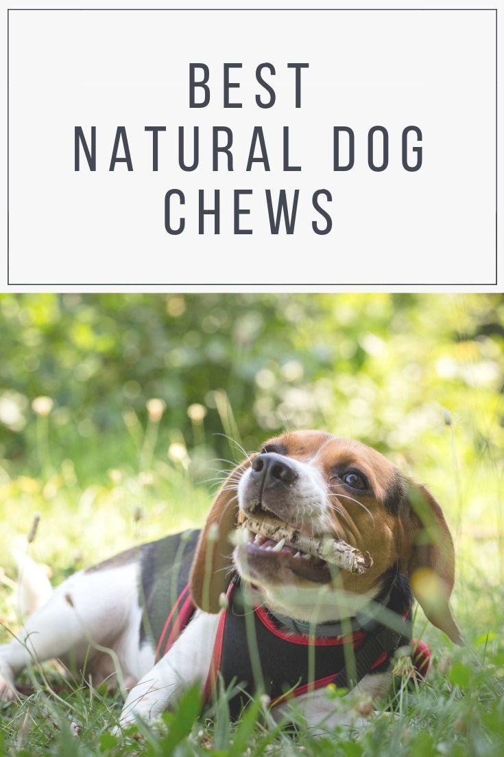 Best Natural Dog Chews Treats In The Uk