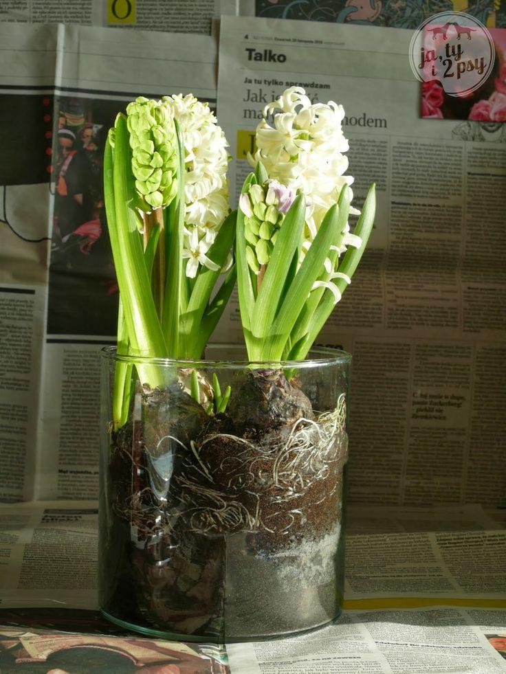 Ja, ty i 2 psy: DIY bulbs in a jar