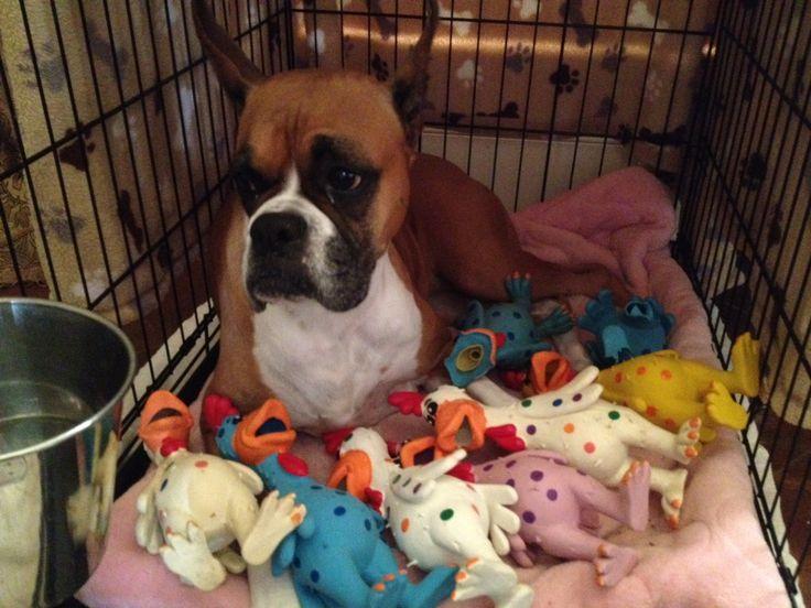 Embarazo psicológico en perros: Causas, síntomas, tratamiento