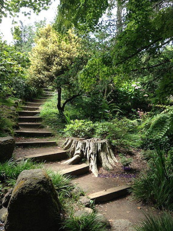 Going Up - The Path - Botanical Garden, San Francisco Anaïs Art Shoppe.  Www.AnaisArtShoppe.etsy.com