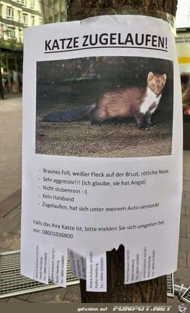 Katze zugelaufen.jpg – funmail2u