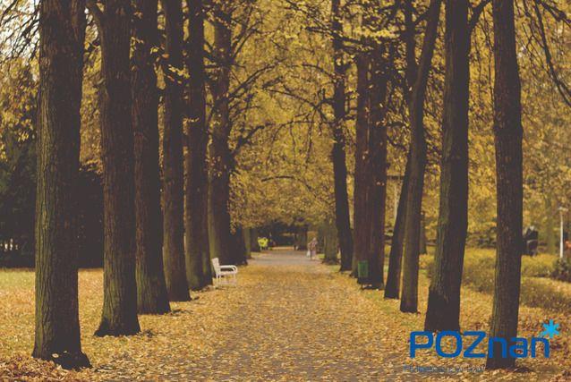 [fot. O. Zelenska] #poznan
