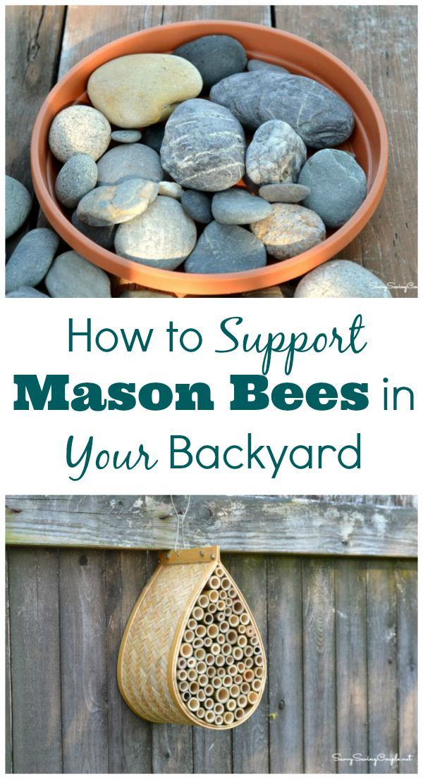 Bee Friendly and Support Your Local Mason Bee Population. #BeeBold #SavetheBees #ad