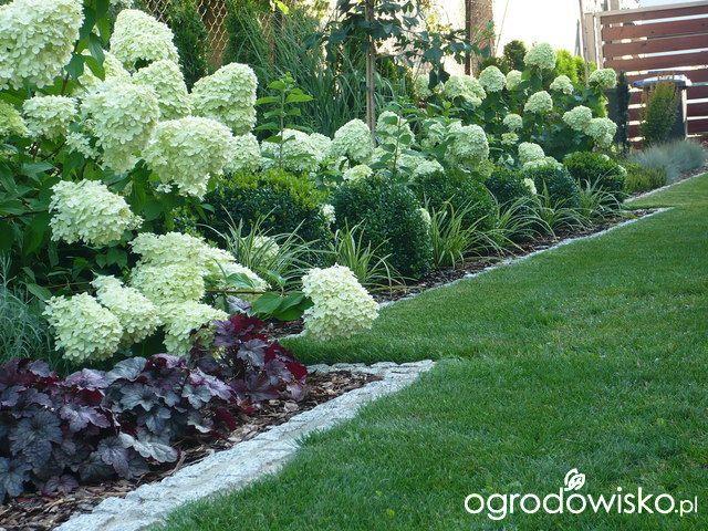 Ogrodowy powrót do dzieciństwa. - strona 434 - Forum ogrodnicze - Ogrodowisko