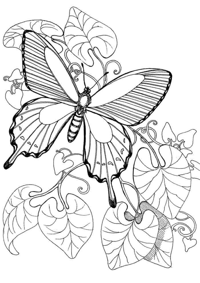 Spring Butterfly Coloring Pages Butterfly Coloring Page Animal Coloring Pages Deer Coloring Pages