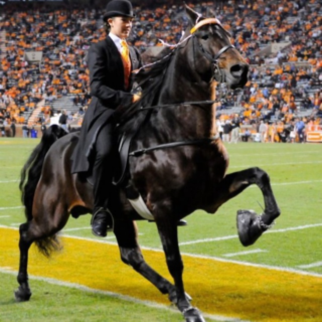 Tennessee walking horse at Tennessee Football game   they outta have this as a mascot too!!!  pretty awesome!