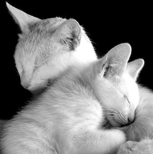 """""""A Mother's arms are made of tenderness, and children sleep soundly in them."""" --Victor Hugo"""