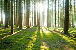 Sunny Forest - Download From Over 47 Million High Quality Stock Photos, Images, Vectors. Sign up for FREE today. Image: 32603510