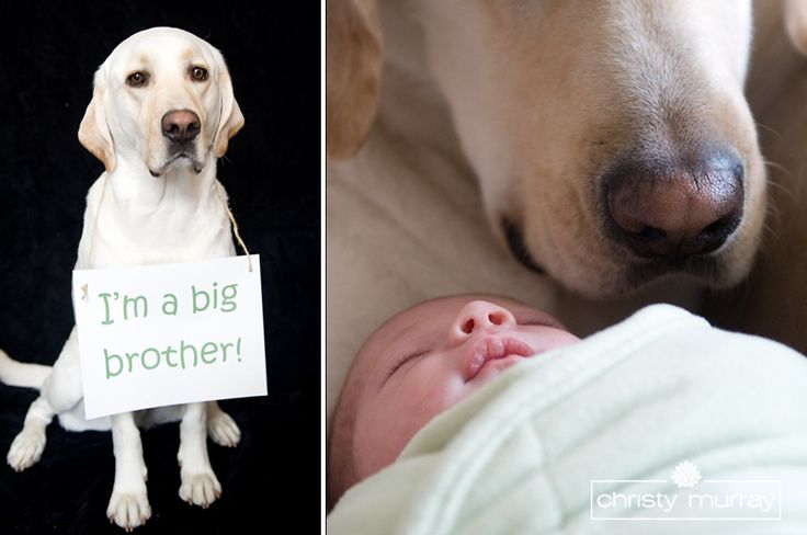 I love people who loves dogs like their children. If we have kids, Daisy will totally have pictures like this.